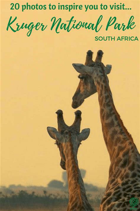 Kruger National Park: 20 photos to Inspire You! • The